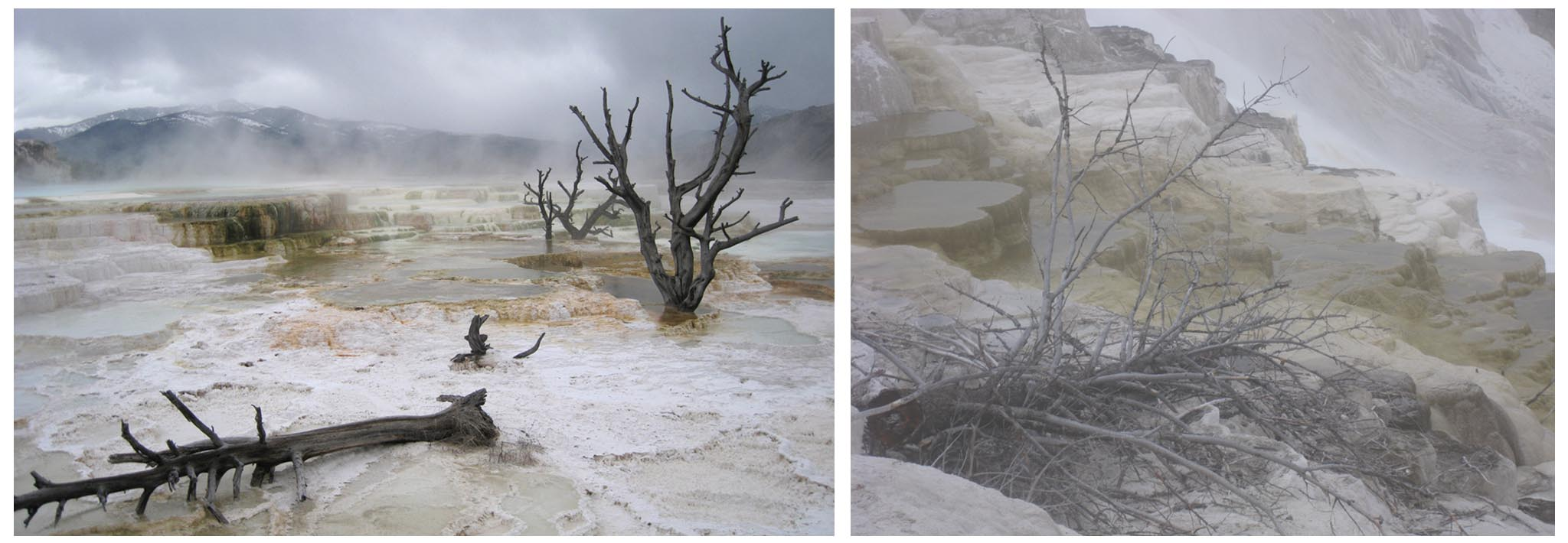 USA - Wyoming - Yellowstone - Mammoth Hot Springs // Travertine terraces in the mist